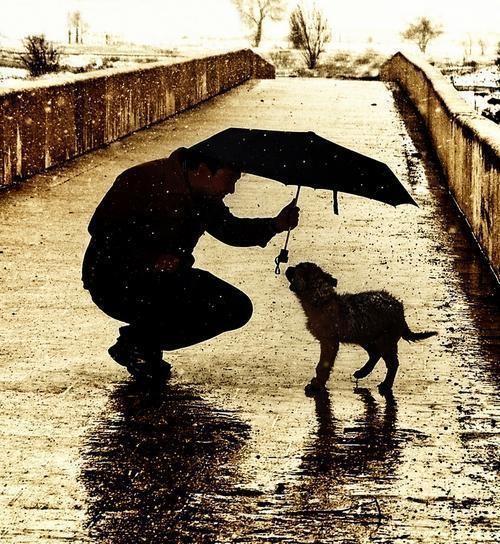 Homem dando abrigo ao cãozinho de rua em matéria na RHG Seguros